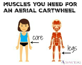 muscles-you-need-for-an-aerial-cartwheel