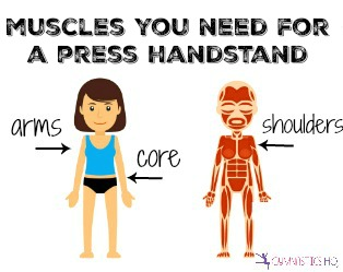 muscles-you-need-press-handstand