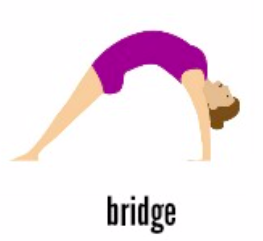 Bridge is an important basic shape in gymnastics.
