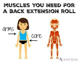 muscles you need for a back extension roll